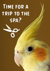 Time For a Trip To The Spa?